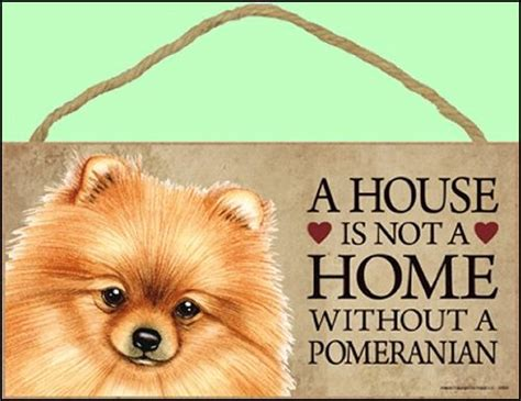 how to groom a pomeranian cut how to groom a pomeranian how to cut pomeranian hair at home