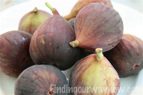le vogelkäfig fresh fig jam recipe finding our way now