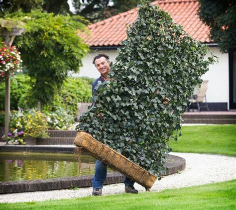 How To Build A Hop Trellis Sichtschutz F 252 R Terrasse Eine Gr 252 Ne Wand Sch 252 Tzt Ihre