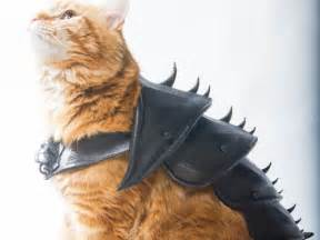 Design Outside Of House Online Free make sure your cat is battle ready with 3d printed cat