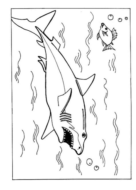 shark coloring page free free printable shark coloring pages for kids