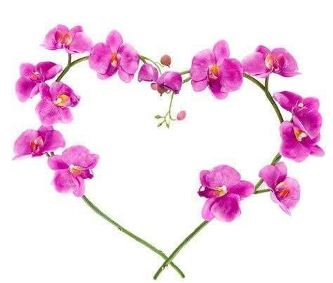 wallpaper flower romantic love pink orchid flower romantic wallpaper 24 3687 hd