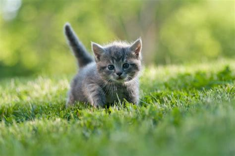 cute names for gray and white cats