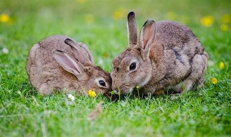 How To Get Rid Of Rabbits Both In Winter And In Summer 7 Proven Control Methods And Tips
