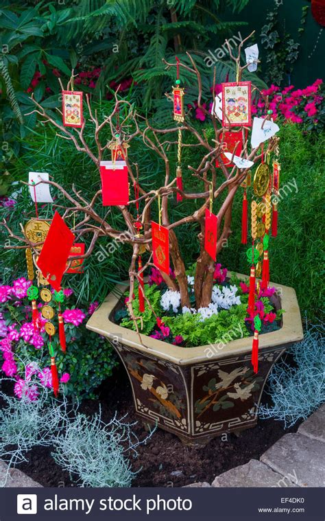 money plant for new year money tree in the feature pavilion celebrates the
