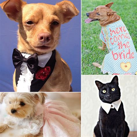 Wedding Attire For Dogs by Pet Wedding Attire Popsugar Pets