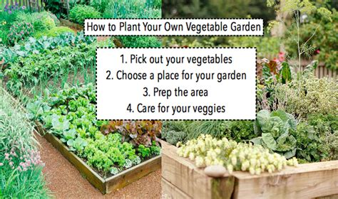 Plant Your Own Garden by How To Plan Plant Your Own Vegetable Garden