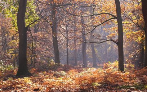 Img 20111113 0591 01 Lights Woodland