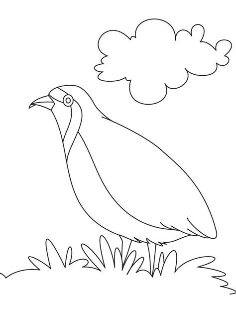 coloring pages quail quail coloring page az coloring pages