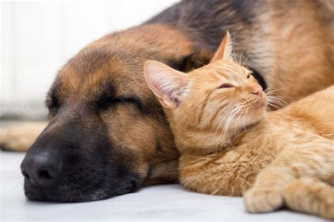cats and dogs living together cats and dogs living together in harmony alliance for homeless pets