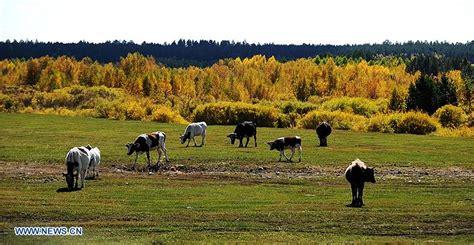 mongolia interior mongolia interior paisaje de hulunbuir
