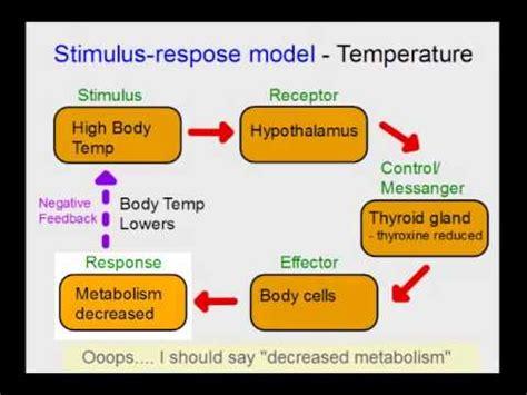 what is homeostasis? | doovi