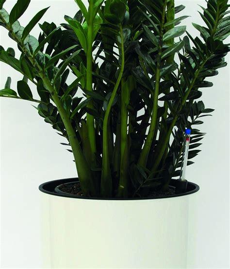 Als Zimmerpflanze by Zimmerpflanzen Hydro Profi Line Pflanzsysteme