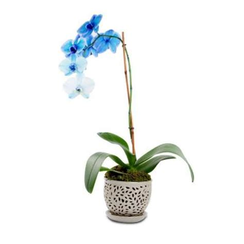 pennington 5 5 in ceramic flagstone orchid planter