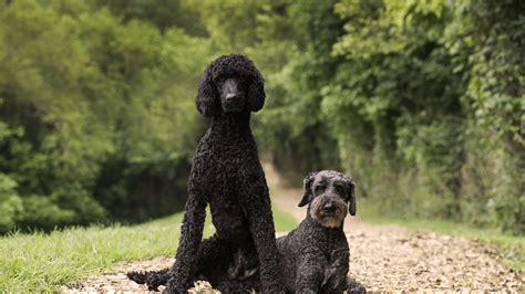 haircuts bryant arkansas home bryant dog grooming and dog boarding