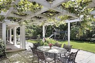 pergola plants and vines landscaping network