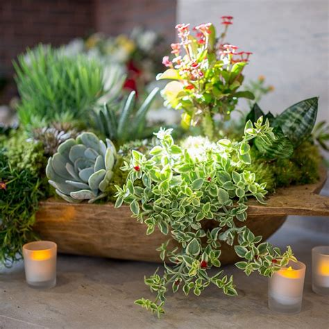decorating pottery decorating with succulents pottery barn