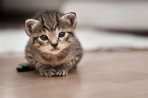 www cute another round of awesomely cute kittens
