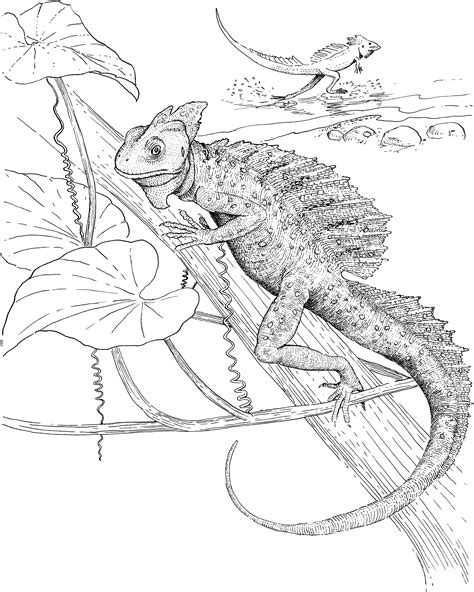 lizard coloring pages print free lizard coloring pages