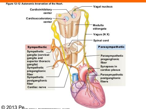 Http Www Organifi 2 Classic Cb Detox Guide Aff by Adrenal Glands Pictures Posters News And On