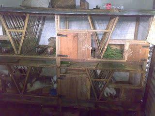 Alas Kandang Merpati burung merpati tips membuat kandang kelinci tepat dan sehat