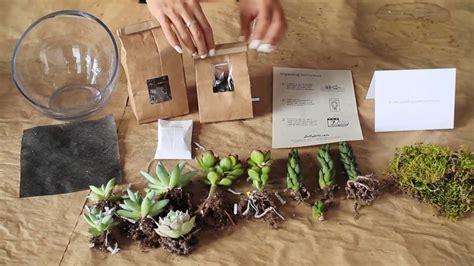 whats   diy succulent terrarium kit  juicykitscom