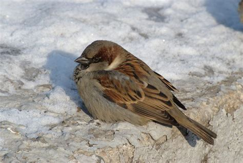 how do birds keep warm in winter