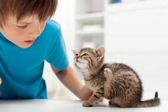 Flohbefall Erkennen by Fl 246 He Bei Katzen Symptome Und Behandlung