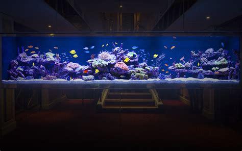 aquarium architecture custom aquarium design luxurious custom made aquarium aquarium architecture