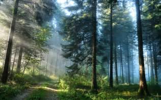 Woods L Sesshyswind Images A Beautiful World Hd Wallpaper And