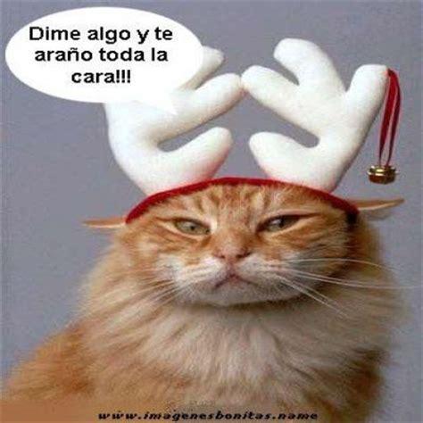 imagenes lindas y graciosas de navidad gatitos chistosos con frases buscar con google humor