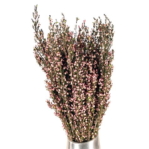 Log Home For Sale by Dried Flowers Heather Erica Deliciosa