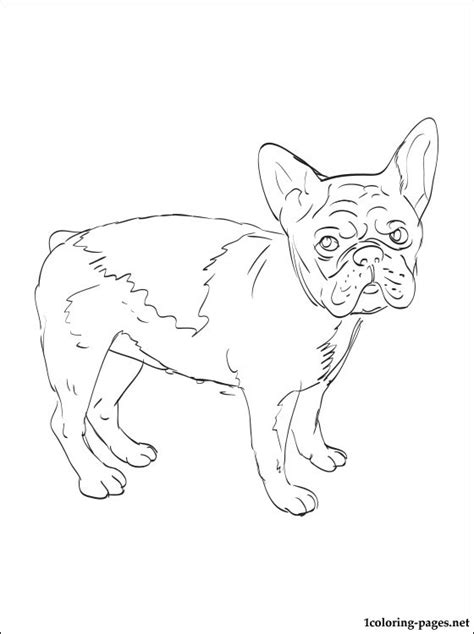 free french bull dog coloring pages