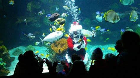 California Christmas Lights Reviews Of Kid Friendly Attraction Columbus Zoo