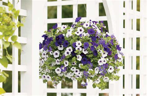 Sixteen Acres Garden by Caring For Hanging Baskets 16 Acres Garden Center