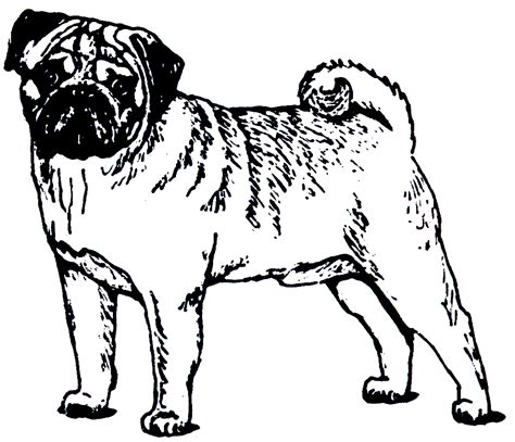 Pugs Coloring Pages Picture To Pin On Pinterest Thepinsta Pug Coloring Pages