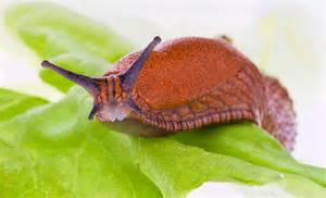 how are slugs and snails different wonderopolis