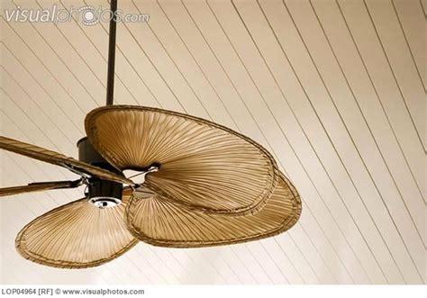 beachy looking ceiling fans coole deckenventilatoren fur kinder sniperange com