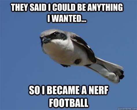 Funny Bird Memes - sylestia forums