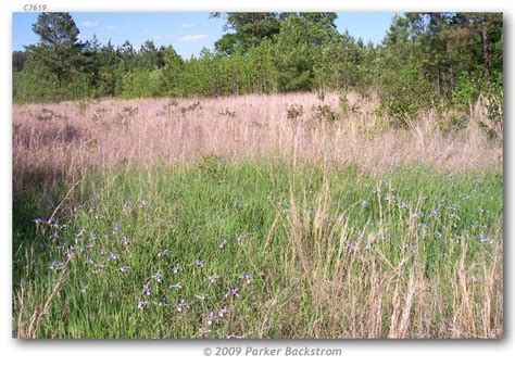 si鑒e habitat euphyes b bimacula habitats