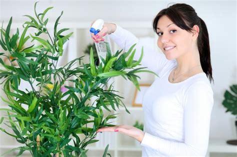como humidificar una habitacion remedios caseros para humidificar una habitaci 243 n
