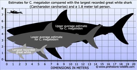 megalodon shark size megalodon size shark global animal