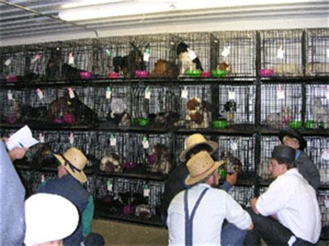lancaster puppy mills vetcbs 187 the puppy mill problem