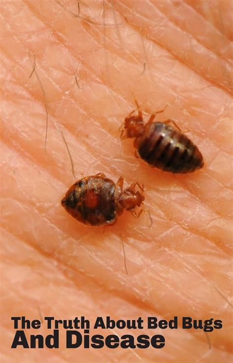 can you get sick from bed bug bites bed bugs