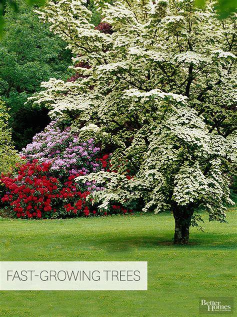 fast growing flowering shrubs uk fast growing trees