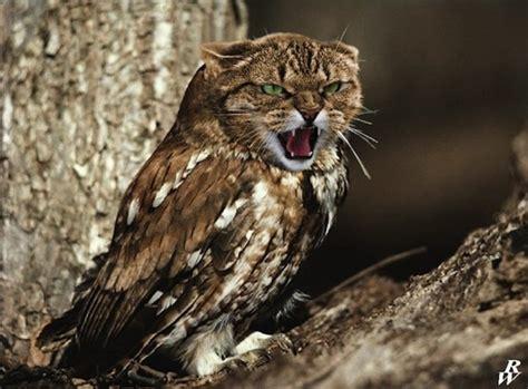 scary aqua owl bird design creepy or owls with cat heads designtaxi