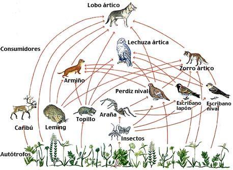 que son las piramides cadenas y redes troficas ecosistemas redes tr 243 ficas redes energ 233 ticas cadenas