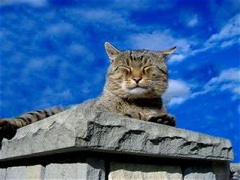 come alimentare un gatto come nutrire un gatto per starnuti russelmobley