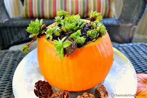 Pumpkin Planter by Hometalk Pumpkin Planter With Succulents