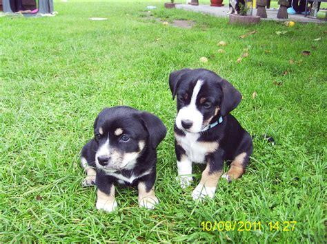 kleine hunde suchen ein neues zuhause 2 hundewelpen suchen noch ein neues zuhause mischlinge